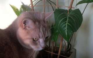 Ядовитые и раздражающие растения в горшках [ФОТО]