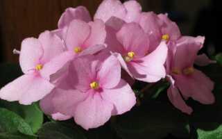 Цветы в горшках легко выращивать (также в отопительный сезон)