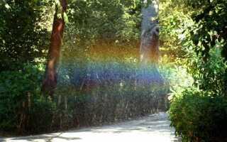 Автоматическая система полива сада: выбор, сборка, стоимость