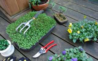 Весенние работы в саду: как ухаживать за цветами, кустами и газоном