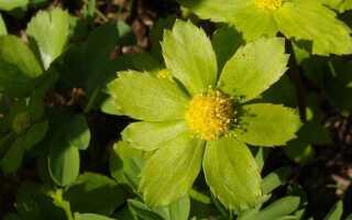 Весенняя гордость Цешин и садовые украшения