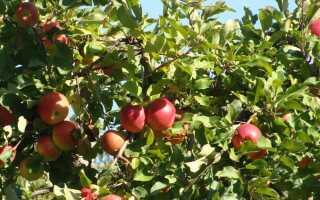 Когда и как сажать фруктовые деревья и кустарники