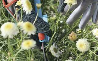 Работы в саду и на участке: как безопасно их делать