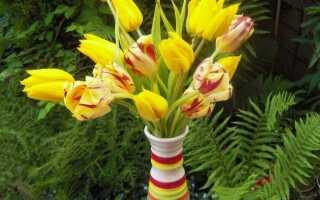 Срезанные цветы — уход