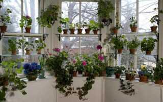 Цветы на окне —