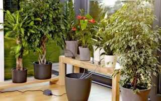 Автоматическая лейка для полива горшечных растений во время праздника