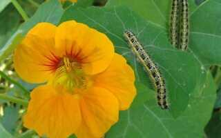 Биопрепараты в защите растений