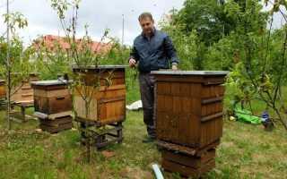Пчелы самые трудолюбивые насекомые — узнайте их секреты