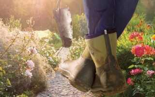 Грибковые заболевания растений. Какое распыление следует проводить осенью и зимой