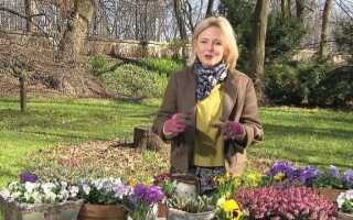 Майя Попелярска рекомендует, какие цветы сажать весной (видео)