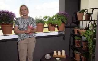 Как устроить небольшой балкон? Мы выбираем растения и мебель