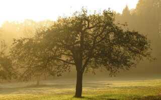 Осеннее опрыскивание фруктовых деревьев — что, когда и чем опрыскивать