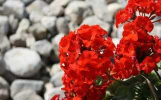 Декоративные камни в саду