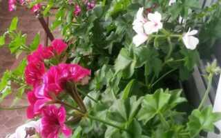Сад на балконе — балкон Кшиштофа — Э-сад
