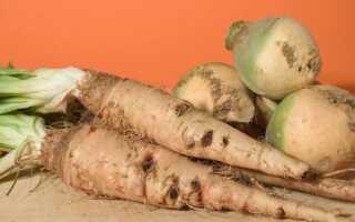 Сальсефия — свойства и выращивание. Как правильно есть этот овощ