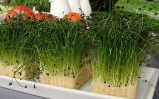 Выращивание в домашних условиях шаг за шагом