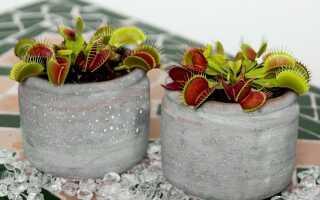 Как вырастить хищные растения в домашних условиях