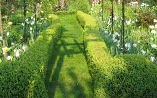 Обрезка живой изгороди: какой инструмент это сделать