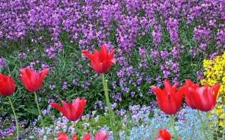 Цвета в саду — значение