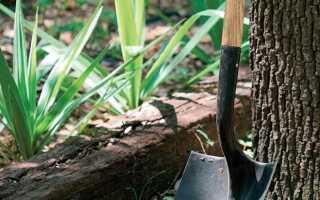 Садовая почва — как улучшить качество почвы