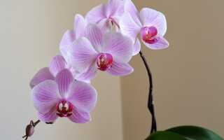 Самостоятельное размножение орхидей. Как сделать это шаг за шагом