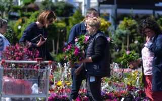 Цветы, многолетники и другие многолетние садовые растения, которые легко выращивать