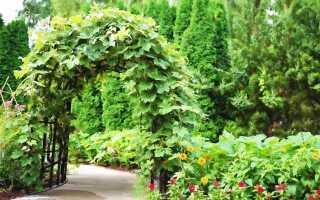 Идея для сада — райский сад