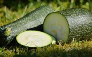 Сквош, цуккини и патисон — что это за овощи, сходства и различия