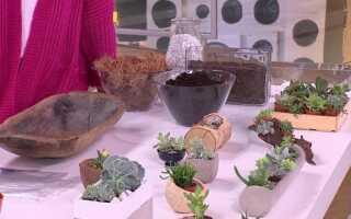 Суккуленты в квартире — как их выращивать и размножать (ВИДЕО)