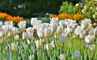 Цветочные луковицы: их также можно посадить в октябре