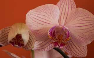 Орхидеи — экзотика на ветке