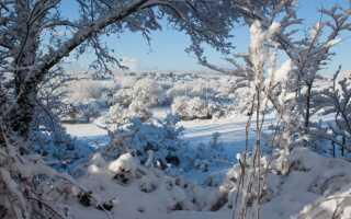 Зимняя консервация в саду и дома