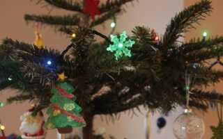 Что делать с елкой после Рождества? Мусорный бак — худший выбор