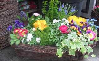 Луковые растения в горшках: как ухаживать за ними и что дает нам такой способ выращивания