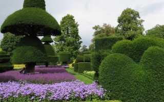Топиарий: формованные кустарники в саду. Как это делается
