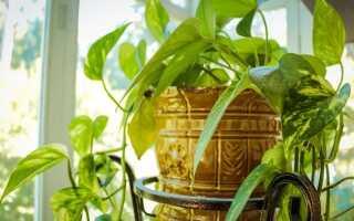 Как выращивать горшечные растения в отопительный сезон