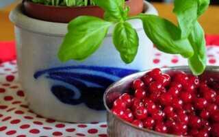 Красная смородина — свойства, уход, выращивание