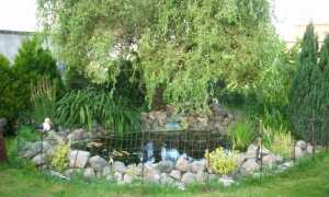 Водяная яма — как ее построить и вырастить
