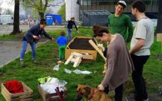 Городское озеленение, т.е. выращивание, даже если у вас нет сада (ФОТО)