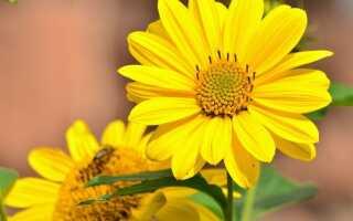 Подсолнухи для сада — что сажать и за чем ухаживать