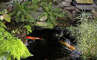 Садовый пруд, бассейн, пруд в саду — проверьте, что закон говорит об этом