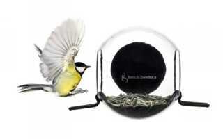 Необычные кормушки для птиц (ФОТО)