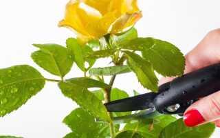 Садовый инструмент для обрезки — он будет вам полезен
