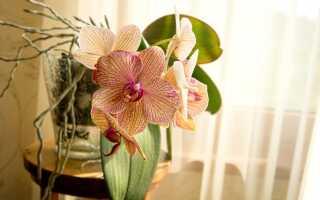7 принципов, которые должен знать каждый любитель орхидей
