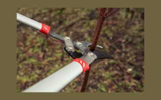 Что подрезать кусты и деревья: выбрать ручной секатор
