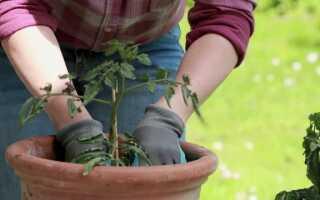 Садовые работы во второй половине мая (ВИДЕО)