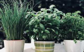 Как выращивать травы в домашних условиях. Мы создали садовую траву на кухне