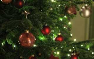 Натуральная новогодняя елка: что нужно сделать, чтобы сохранить ее как можно дольше