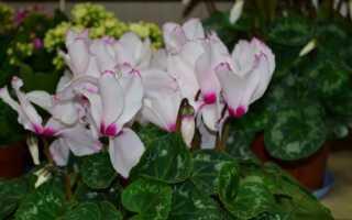 Подбор горшечных цветов для квартиры. Какие растения любят солнце, полутень и тень