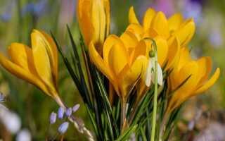 Весенние цветы — март —